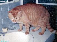 Mogwhi the Kat - Wallpaper - cat,kat,gato - Kats R Us