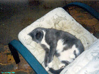 Sox the Kat - Wallpapers - cat,kat,gato - Kats R Us