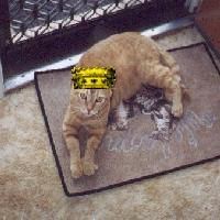 Mogwhi the Prince