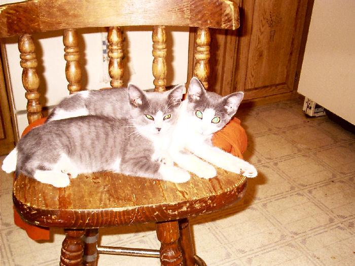 Bundy - cat,kat,gato - Kats R Us