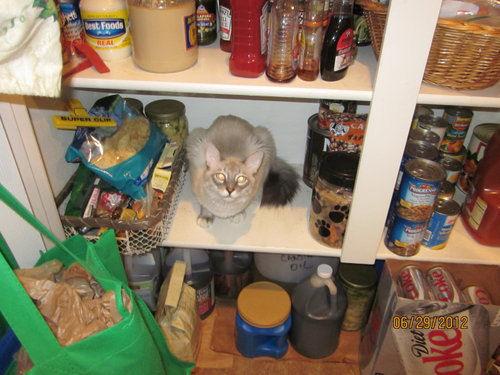 Frankie and Kitty - cat,kat,gato - Kats R Us