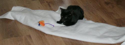 Henry - cat,kat,gato - Kats R Us