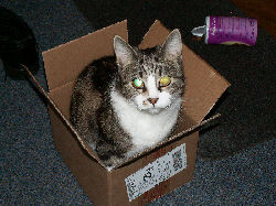 Jessica - cat,kat,gato - Kats R Us