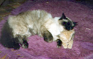 Kokomo and Discobear - cat,kat,gato - Kats R Us