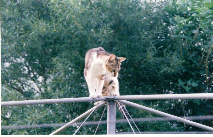 Malcolm Macfursome - cat,kat,gato - Kats R Us