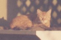 Mogwhi - cat,kat,gato - Kats R Us
