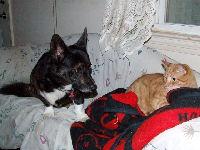 Neelix - cat,kat,gato - Kats R Us