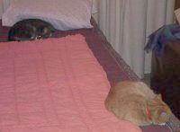 Puzzle and Puss - cat,kat,gato - Kats R Us