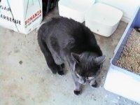 PV and Four-Legs - cat,kat,gato - Kats R Us