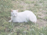 Squeek - cat,kat,gato - Kats R Us