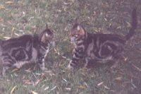 Stevos Marinarinos - cat,kat,gato - Kats R Us