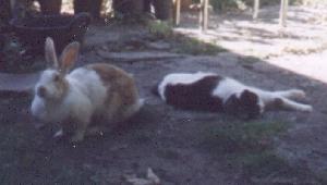 Sue - cat,kat,gato - Kats R Us